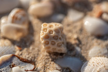 Coral Stone On Sand