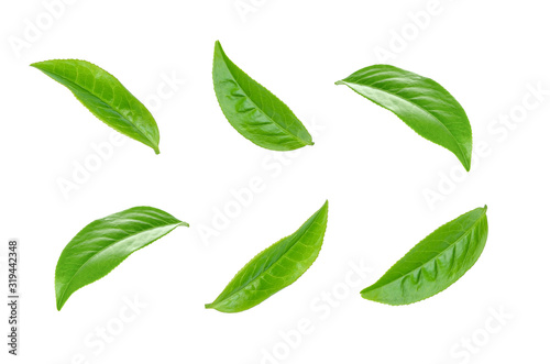 Fototapety, obrazy: Green tea leaf collection isolated on white background