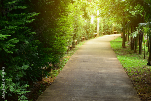 Fotografia, Obraz pathway in green nature of public park of walking relaxation