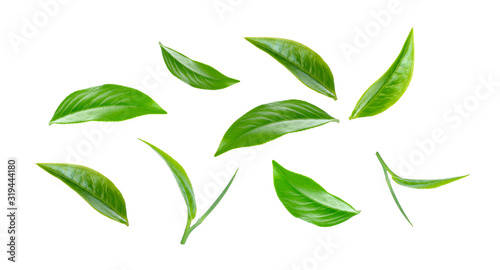 Fototapeta Green tea leaf collection isolated on white background