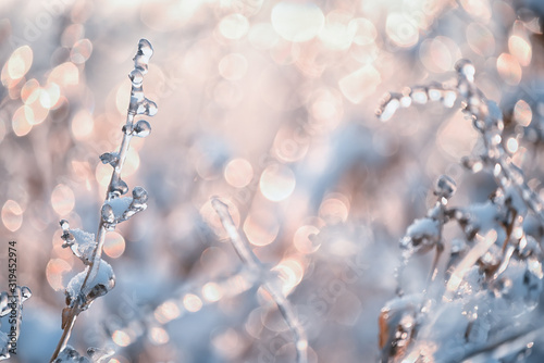 Dry flowers in a meadow covered with crystals of sparkling snow-white hoarfrost Canvas Print
