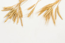 Spikelets Of Wheat And Rye. He...