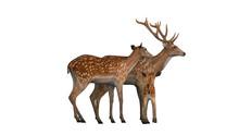 Gazelle Deer Family Side View ...