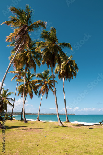Photo amazing, wild and deserted beach on a tropical island in the Caribbean
