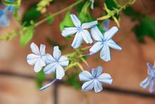 Natural Beautiful Small Blue J...