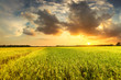 Green field and sunset with cloud at agriculture countryside.
