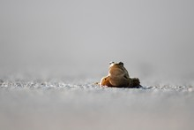 Beautiful Shot Of A Small Frog...
