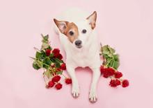 Valentines Day Romantic Backgr...