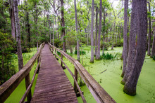 A Wooden Walkway Leads Through...