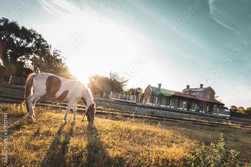 Fototapeta Bicolor horse next to the train station obraz