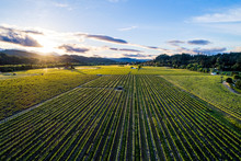 An Aerial Shot Overlooking Vineyards In Dry Creek Valley In Sonoma Wine Country At Sunset Near Healdsburg, California.