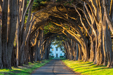 Beautiful Golden Sunset Light Illuminates A Road Under A Tunnel Of Cypress Trees In Point Reyes National Seashore, California