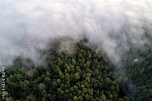 Aerial view of trees covered with fog in Sonoma Coast State Park - 319520906