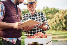 Fruit Growers Checking Quality...