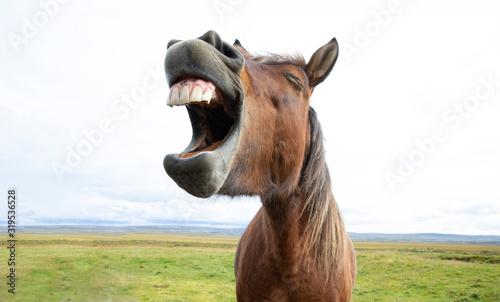 Horse Laughter Wallpaper Mural