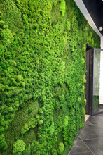 Green Preserved Moss Wall For ...