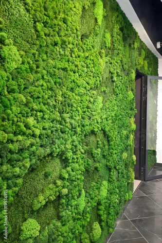 Fototapeta green preserved moss wall for office decor obraz
