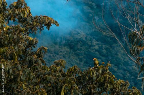 Obraz na plátně hermosa selva