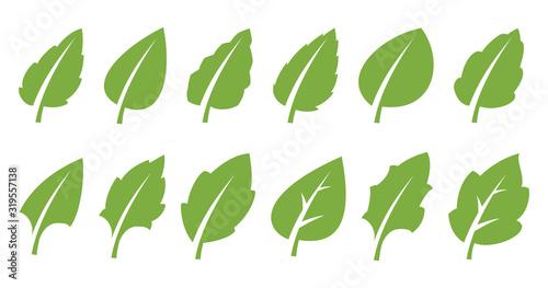 Fototapeta Green leaf set obraz na płótnie