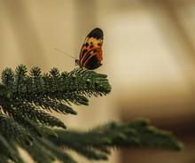 Butterfliy On Flowers