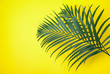 Leinwanddruck Bild - Beautiful lush tropical leaves on yellow background. Space for text
