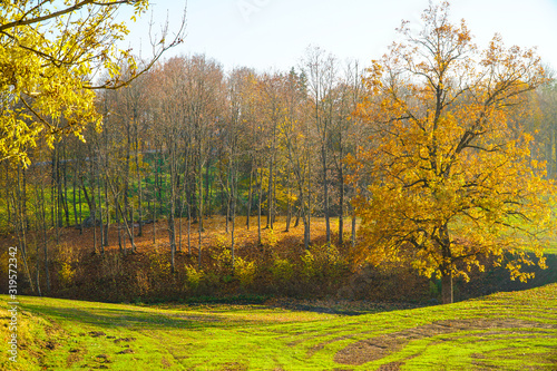 Fototapety, obrazy: Autumn landscape beautiful colored  glowing in sunlight. wonderful picturesque background. color in nature. gorgeous view.