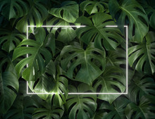 Minimal Nature Concept. Creative Layout Made Of Tropical Leaves With White Neon Frame. Flat Lay.