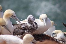 Close-Up Of Young Seagulls