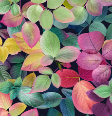 Fototapeta Do Spa Colorful leafs on dark background,Mother's Day,wedding,birthday,Easter,Valentine's Day,Spring,Summer
