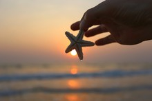 Cropped Hand Holding Star Fish Against Sea During Sunset