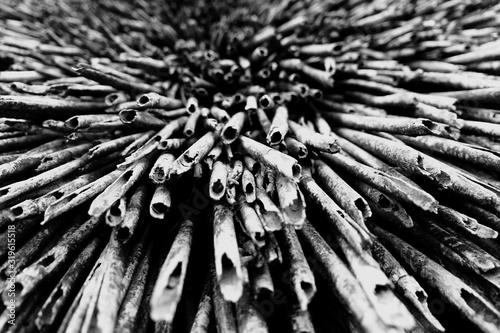 Fotografía Full Frame Shot Of Dry Bamboos