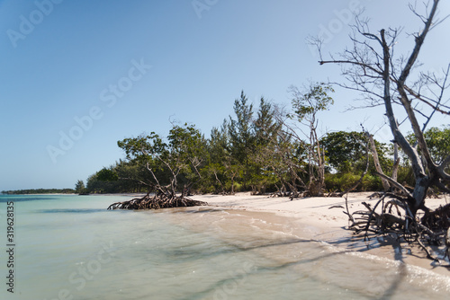 Mangroves on a beach in Cuba.
