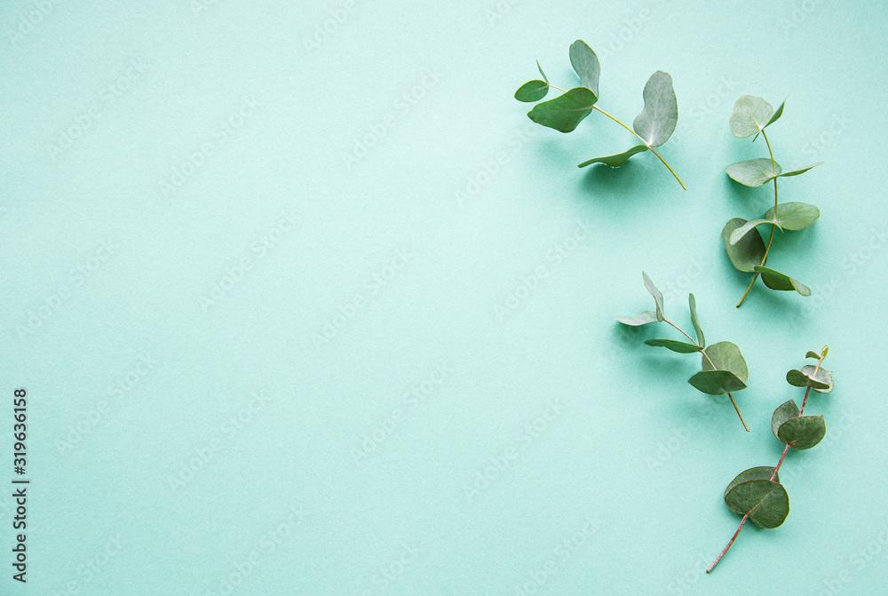 Fototapeta Eucalyptus branches on light green  background