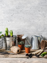 Garden Composition With Hyacin...