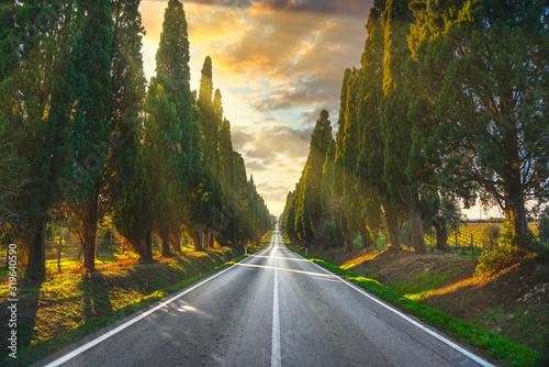 Obrazy powiększające wnętrze   bolgheri-famous-cypresses-tree-straight-boulevard-maremma-tuscany-italy