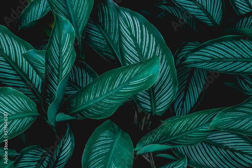 Papier Peint - green leaves nature  background, closeup leaves texture, tropical leaves