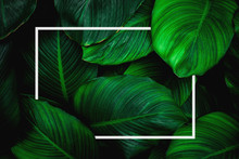 Tropical Leaves With White Frame, Abstract Green Leaves, Natural Green Background