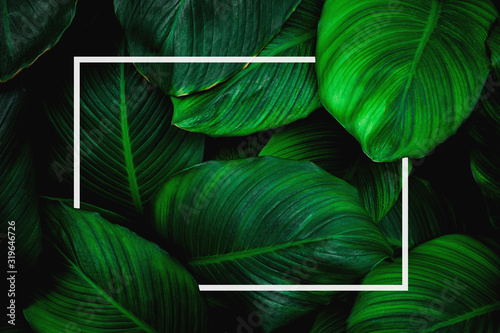 tropical leaves with white frame, abstract green leaves, natural green backgroun Fototapet