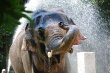 VIEW OF AN Elephant Splashing Water