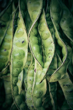 Close Up Of Fava Beans