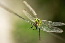 Close-Up Of Dragonfly On Wire
