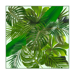 Tropical plant leaf set.Realestic palm leaves.