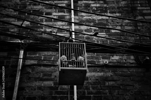 Fotografie, Tablou Low Angle View Of Birdcage