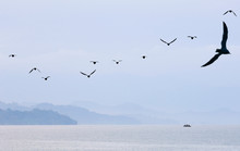 Birds Flying Over Calm Sea