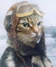Cat Pilot. The Concept Of The ...