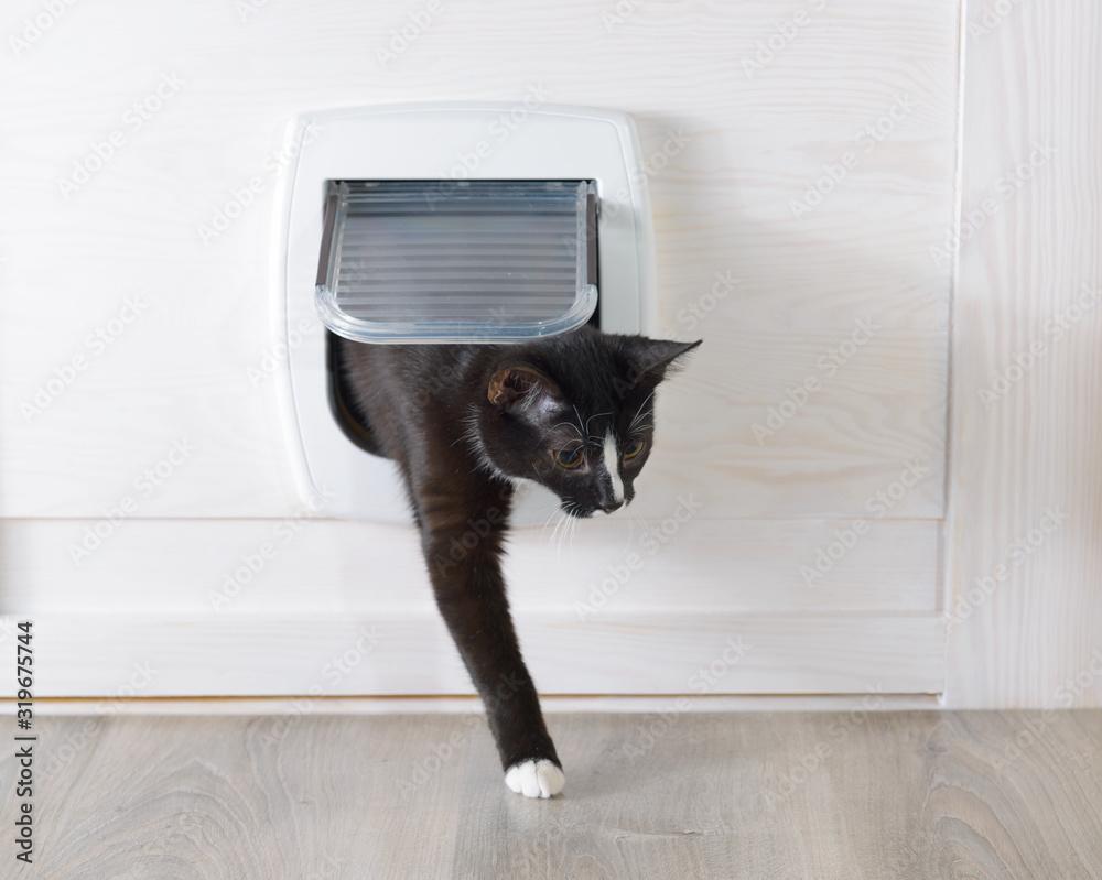 Fototapeta White plastic cat door