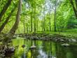 Bach im im Frühlingswald