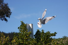 Low Angle View Of Seagull Flying Over Trees Against Blue Sky