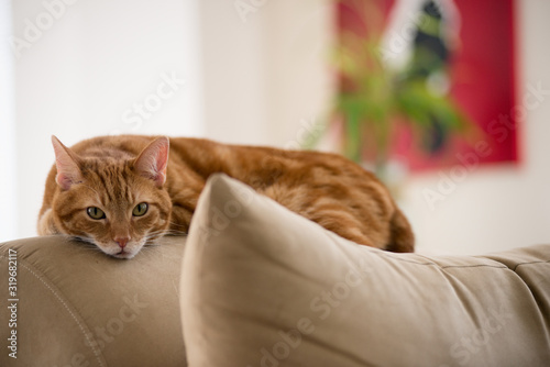 Canvas-taulu Portrait Of Ginger Cat Lying On Sofa At Home