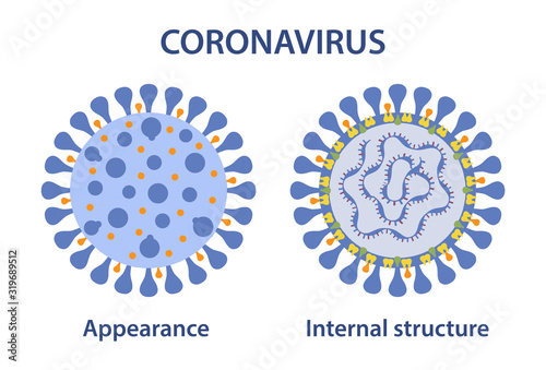 Coronavirus appearance and internal structure Canvas Print